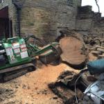 Tree removal in Bradford