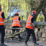 Our Tree Surgeons