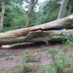 Meanwood evidence of tree decline
