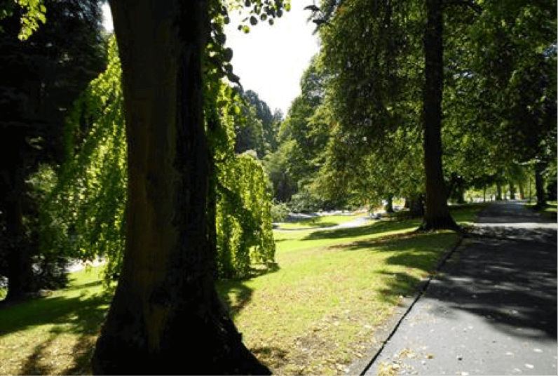 A photo of the trees and landscape of the Valley Gardens in Harrogate