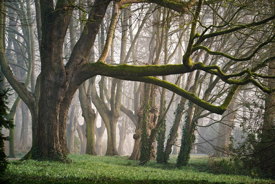 An image of a forest.